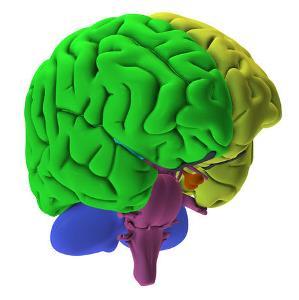 парциальная эпилепсия