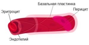 строение капилляров