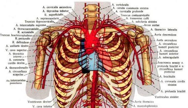 синдром выхода из грудной клетки