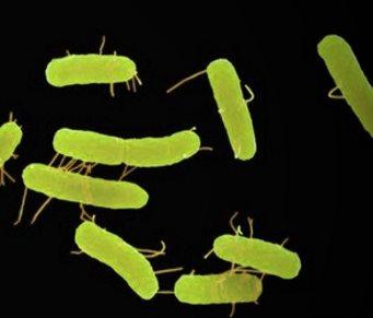 Инфекции, вызванные простейшими
