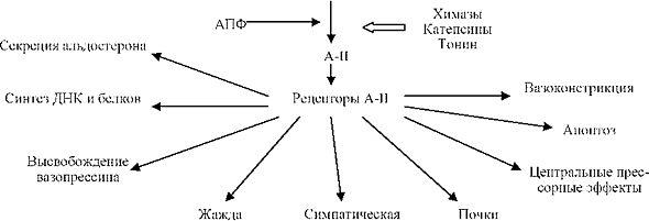 патогенез гипертонической болезни